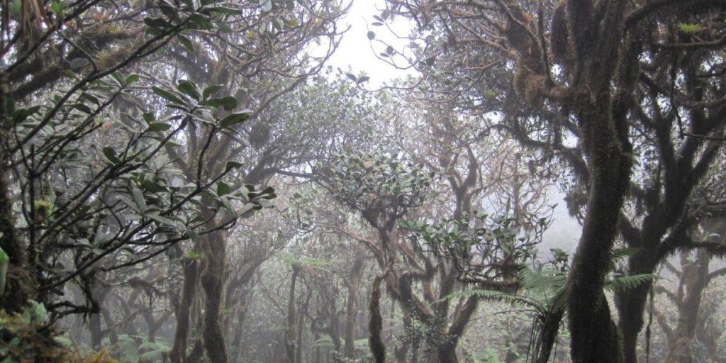 foresta nebulosa