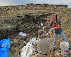 fossili meteorite dinosauri