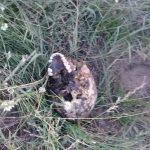 Bracconiere ucciso da un elefante e divorato dai leoni: lasciati solo il cranio e i pantaloni [FOTO]