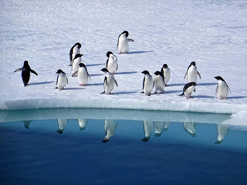 Pinguini ENEA