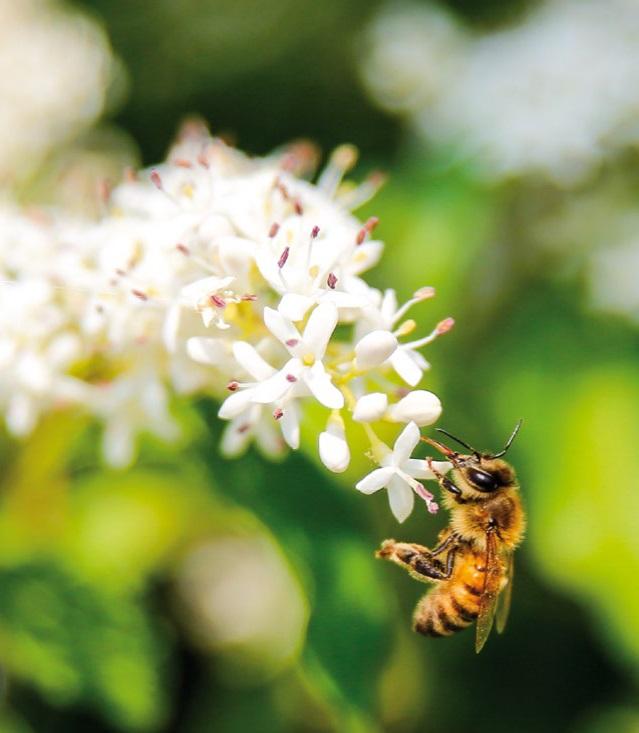 ape fiore miele