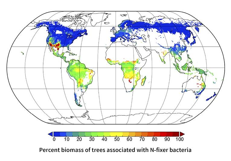 """La distribuzione delle associazioni simbiotiche delle tipologie ecto-micorrize, micorrize arbuscolari e azoto-fissatrici. I dati supportano la neo-denominata """"Regola di Read"""", che stabilisce che le simbiosi fungine micorrize arbuscolari sono più comuni nelle foreste tropicali e temperate, mentre le ectomicorrize sono più comuni nelle foreste a clima più freddo, dove la decomposizione organica è più lenta (Image credit: Brian Steidinger, Stanford University)"""