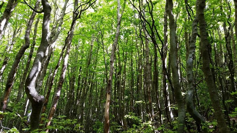 bosco Aspromonte foto Ielacqua