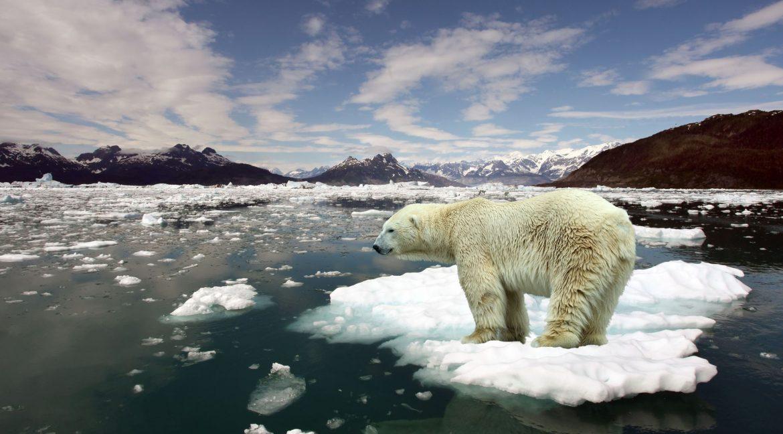 cambiamenti climatici orso polare