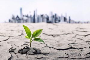 cambiamenti climatici pianta