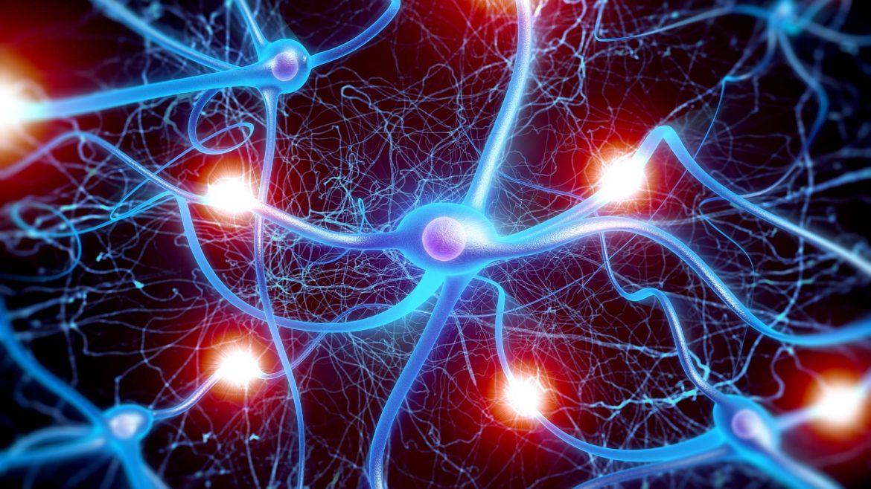 cellule sinapsi connessioni