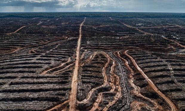 crisi ambiente