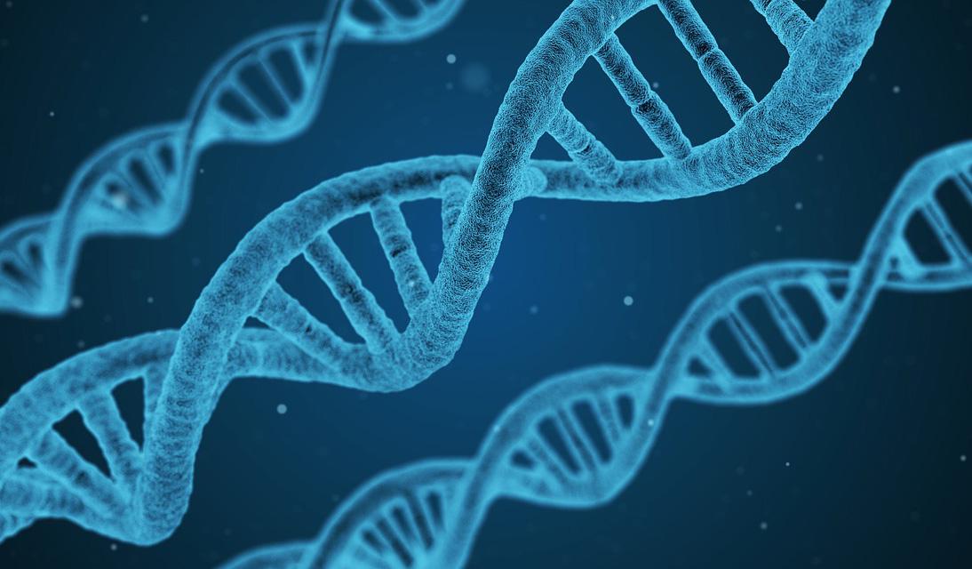 dna genetica