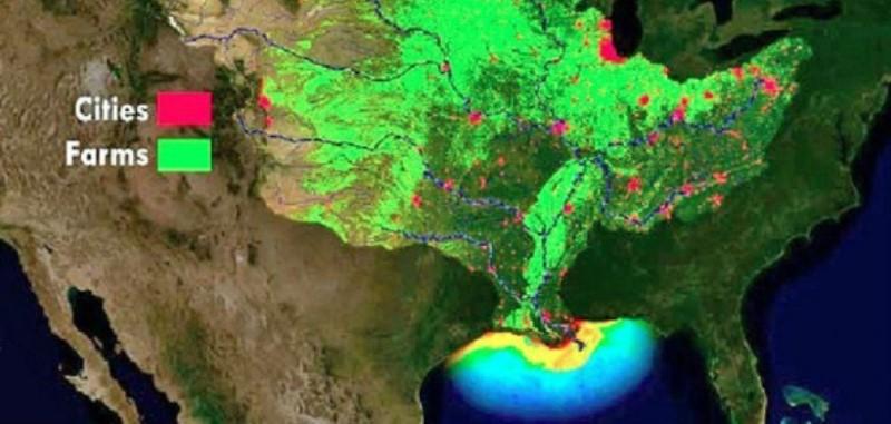 Zona morta Golfo Messico