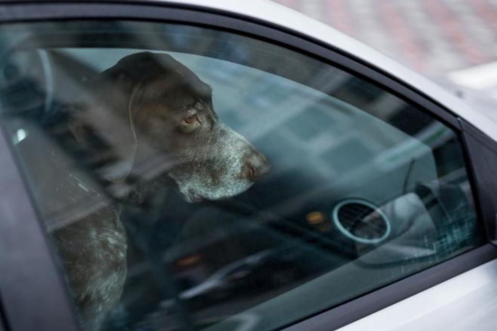 cane chiuso auto
