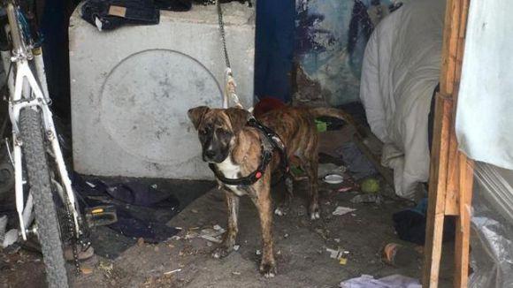 cane salvato polizia box rimini