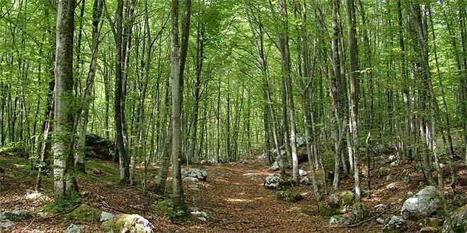 foresta-bosco-boschi-escursioni