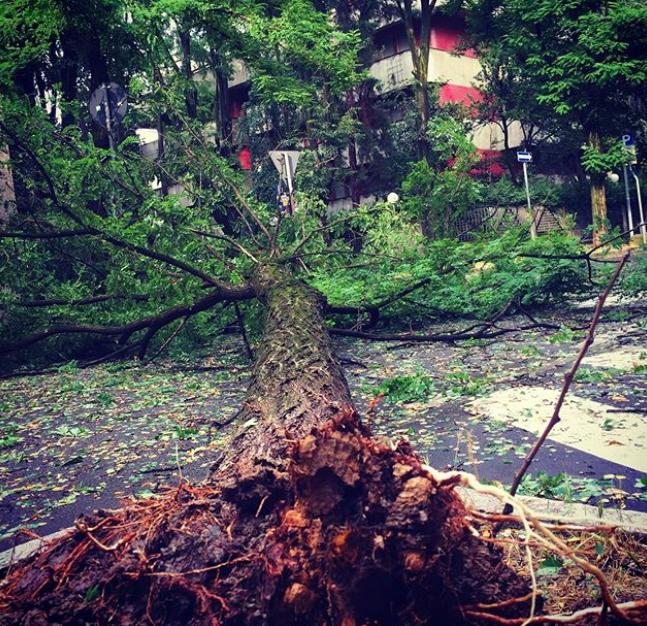 maltempo modena temporale albero