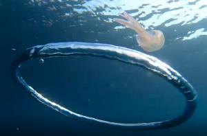 medusa anello aria