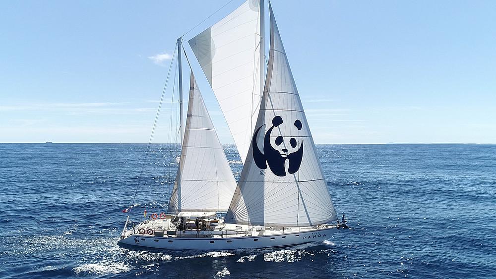 blue panda week wwf