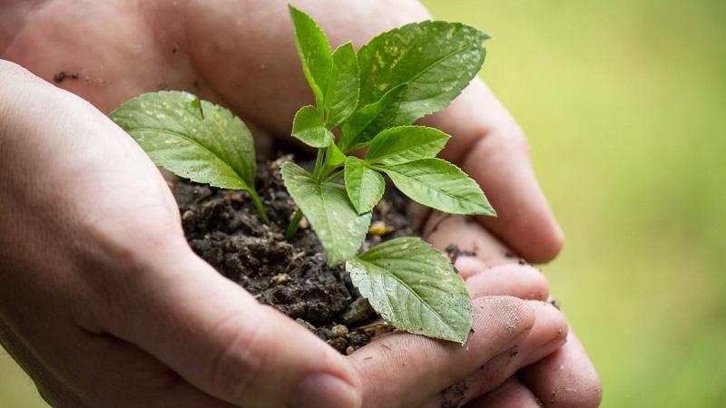 pianta ambiente natura sostenibilità