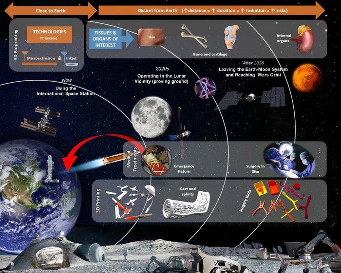 Bioprinting 3D per lo spazio. Credit: TU Dresden/OHB System/Blue Horizon