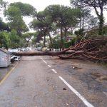 Maltempo, tornado devasta Milano Marittima: abbattuti 2.200 pini secolari, case e auto distrutte [FOTO e VIDEO]