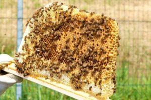 città delle api a58-teem