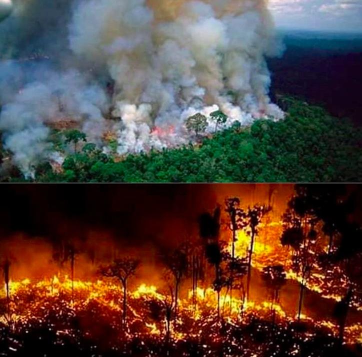 Risultati immagini per Amazzonia: in fiamme