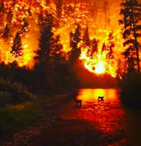 L'Amazzonia brucia e i social pregano per la foresta con ...