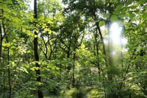 foreste boschi alberi ambiente