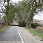 Maltempo, situazione critica in Puglia: Murge sott'acqua, oliveti allagati e alberi secolari sradicati [FOTO]