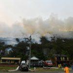 Emergenza in Australia: oltre 2mila koala morti negli incendi, rischiano l'estinzione [FOTO]