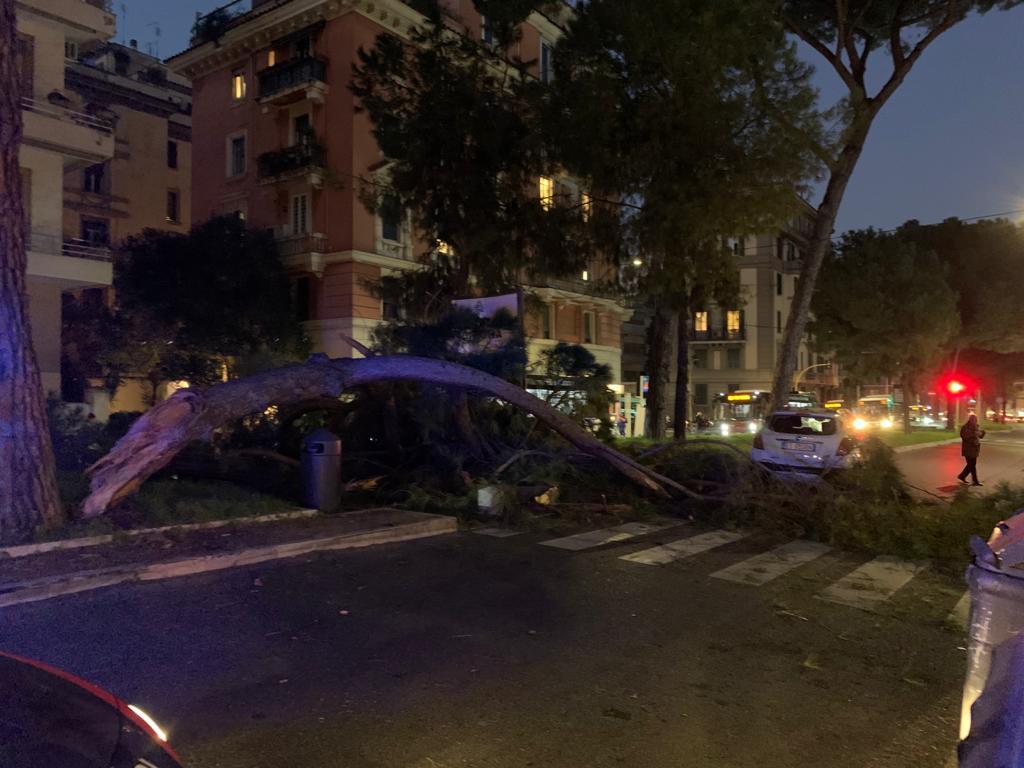 albero caduto roma