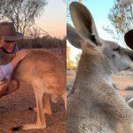 Australia, il canguro abbraccia ogni giorno i suoi soccorritori per ringraziarli e conquista il web, ma non c'entra con gli incendi [FOTO e VIDEO]