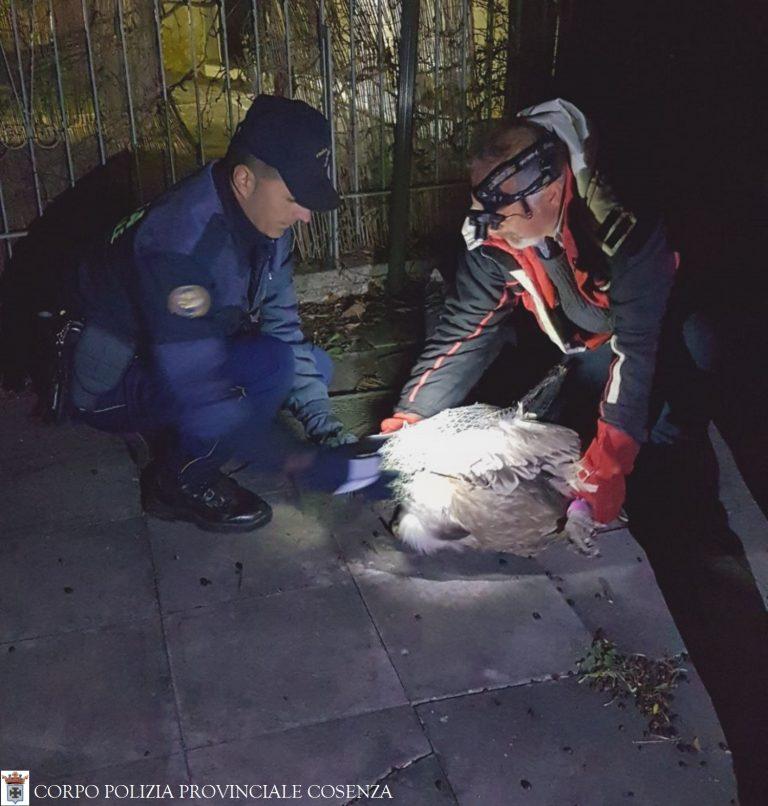 Polizia Prov.CS-S.G.in Fiore