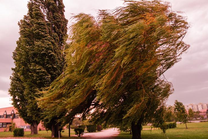 vento forte