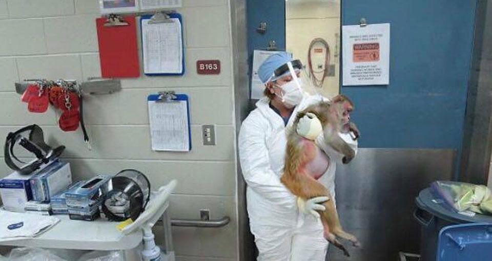 vaccino primati