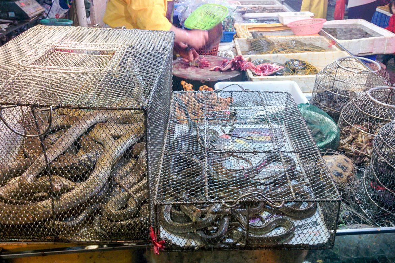 mercato animali selvatici
