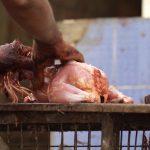 Coronavirus, tutto è partito da un mercato di animali: ecco FOTO e VIDEO di questi loghi degli orrori