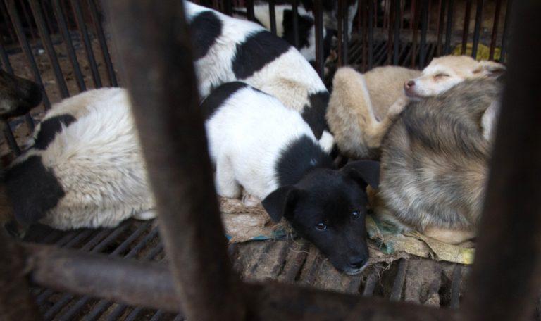 credit Animal Equality