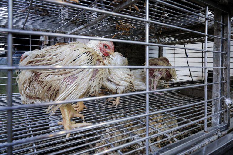 Animal Equcredit Animal Equalityality