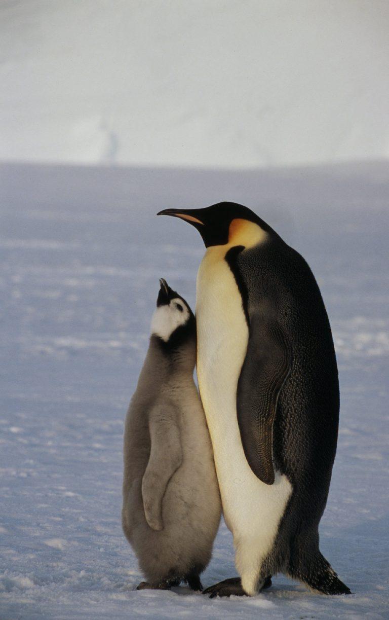 Credit: Fritz Pölking _WWF