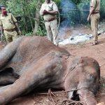 Perché in India hanno fatto esplodere un ananas pieno di petardi nella bocca di un elefante? [FOTO]