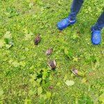 Maltempo Veneto, devastante grandinata a Gaiarine: chicchi di 5-6cm, strage di animali e piante [FOTO e VIDEO]