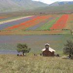 Tanti turisti al Pian Grande per la fioritura multicolore di Castelluccio di Norcia: è un arcobaleno mozzafiato [FOTO]
