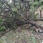 Grandine come pallettoni, Sarsina devastata dal maltempo: Appennino romagnolo in ginocchio [FOTO e VIDEO]