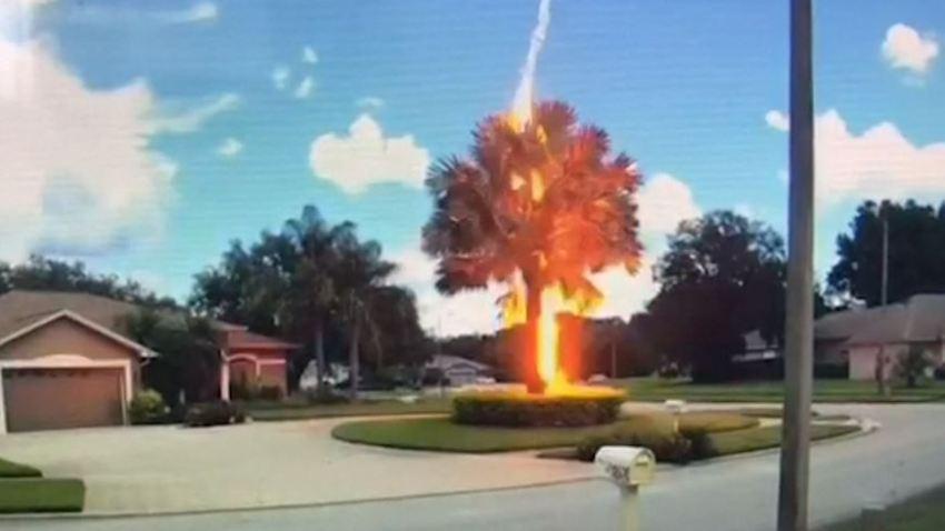 Raro fulmine a ciel sereno colpisce e incendia un albero: le spettacolari immagini dell'inaspettato evento in Florida [VIDEO]