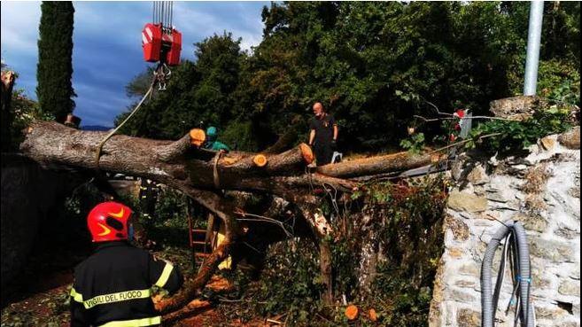 maltempo albero abbattuto toscana