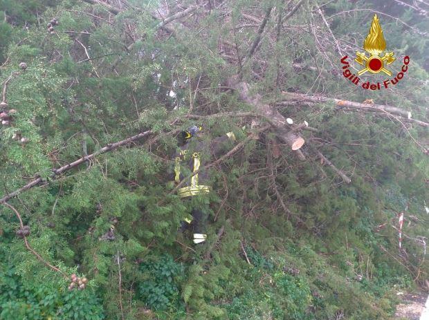maltempo marche alberi abbattuti