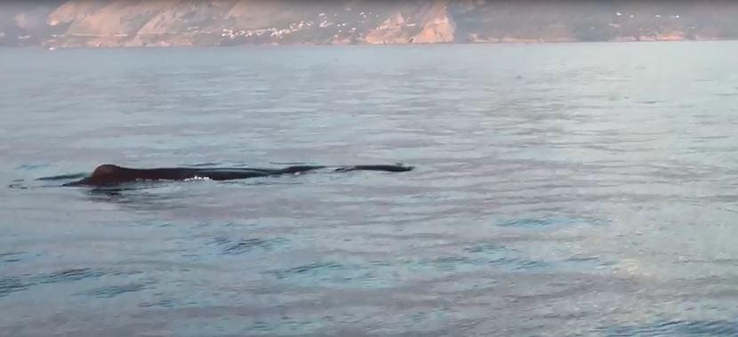 balena maratea