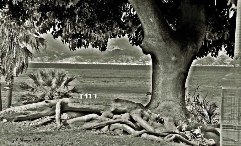 Foto Renzo Pellicano