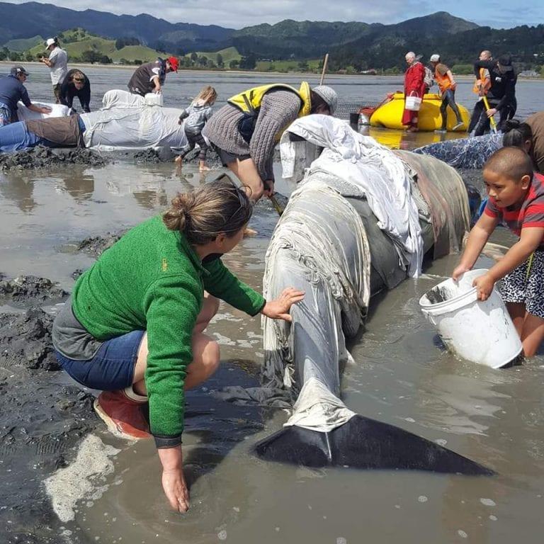 Foto Project Jonah New Zealand (Eythan Diaz, Kimberley Knight, Shervana Lee Davis)