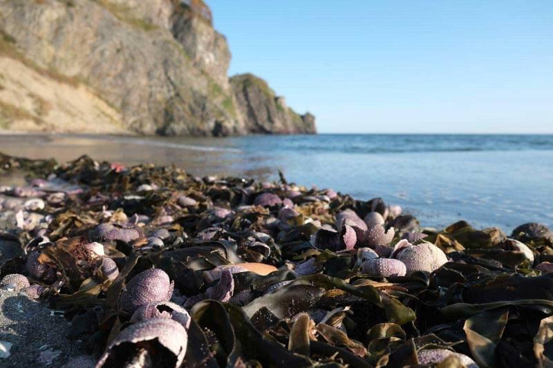 greenpeace disastro ambientale penisola di Kamchatcka russia