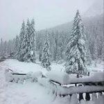 Maltempo, altra neve nella notte sulle Dolomiti venete: accumuli fino a 56cm, fiocchi sotto i mille metri [FOTO e VIDEO]